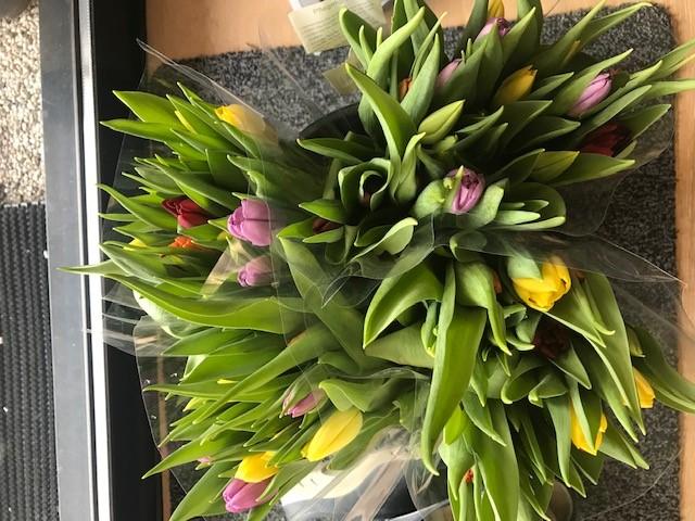 Verrassing : tulpen !